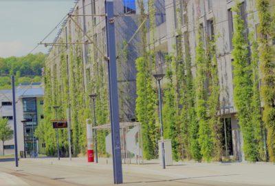 Geoffroy Stern : la végétalisation des villes