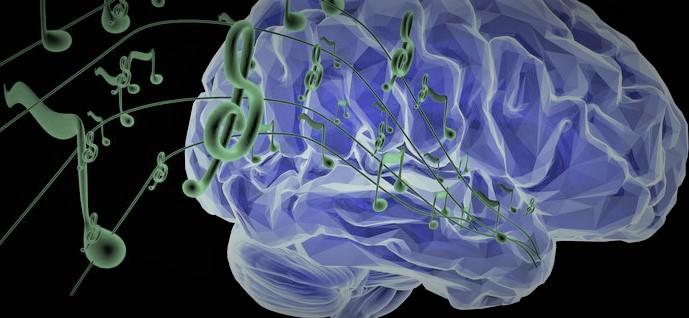 Le cerveau et la perception du son