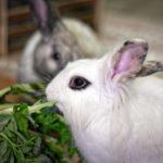 Apprendre à son lapin à faire ses besoins dans sa litière