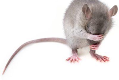 produits anti-souris